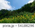 ひまわり畑と青空 54186296
