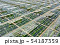 Greenhouses with vegetables 54187359