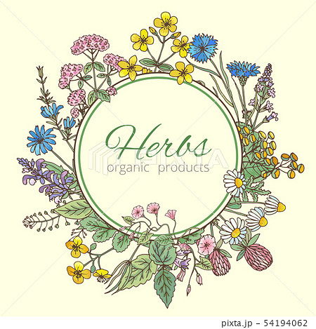 Vector illustration in circle shape. Herbs background, fresh leaves and different flowers. Frame 54194062