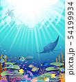 珊瑚礁に暮らす生き物たち 54199934
