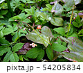 Small red flower buds close up, top view 54205834