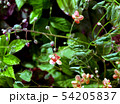 Branch of  red spring flowers, close up 54205837