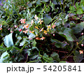 Branch of  red spring flowers, side view 54205841