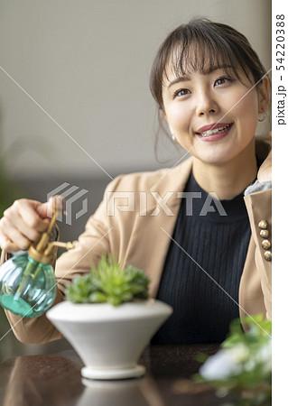 多肉植物ハオルチアオブツーサの美しい透明感の窓を楽しむ為霧吹きで水を与える自然を大切にする優しい女性 54220388