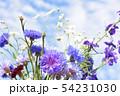 ミックスシードの花畑の切花、ヤグルマギク、チドリソウ、カスミソウ、家庭園芸、花イメージ素材 54231030