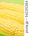 54235364