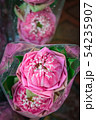 Beautiful water lily or tropical lotus flower. 54235907