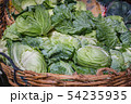 Cabbages in a market's bangkok, Thailand. 54235935