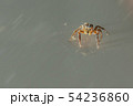 jumping spider insect nature background  54236860