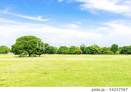 新緑と青空の広がる風景 54237567