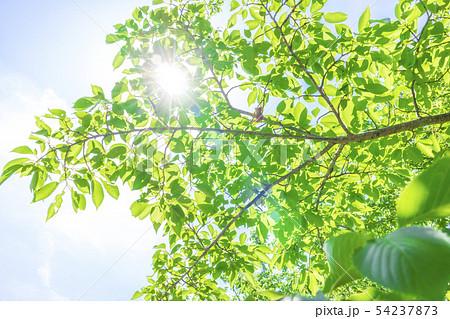 新緑と木漏れ日 54237873