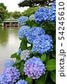清澄庭園に咲く紫陽花と涼亭(6月)東京都江東区 54245610