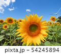 向日葵と青空 54245894