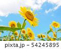 向日葵と青空 54245895