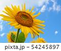 向日葵と青空 54245897