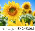 向日葵と青空 54245898