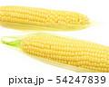 トウモロコシ 2本 54247839