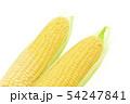 トウモロコシ 2本 54247841