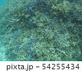 珊瑚礁 沖縄 おきなわ 海 沖縄の海 サンゴ 水中 南の島 54255434