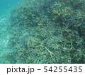 珊瑚礁 沖縄 おきなわ 海 沖縄の海 サンゴ 水中 南の島 54255435