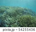 珊瑚礁 沖縄 おきなわ 海 沖縄の海 サンゴ 水中 南の島 54255436