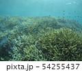 珊瑚礁 沖縄 おきなわ 海 沖縄の海 サンゴ 水中 南の島 54255437