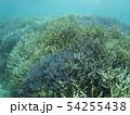 珊瑚礁 沖縄 おきなわ 海 沖縄の海 サンゴ 水中 南の島 54255438