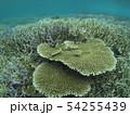 珊瑚礁 沖縄 おきなわ 海 沖縄の海 サンゴ 水中 南の島 54255439