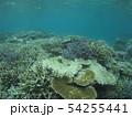 珊瑚礁 沖縄 おきなわ 海 沖縄の海 サンゴ 水中 南の島 54255441