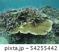 珊瑚礁 沖縄 おきなわ 海 沖縄の海 サンゴ 水中 南の島 54255442