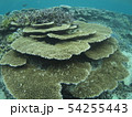 珊瑚礁 沖縄 おきなわ 海 沖縄の海 サンゴ 水中 南の島 54255443
