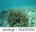 珊瑚礁 沖縄 おきなわ 海 沖縄の海 サンゴ 水中 南の島 54255491