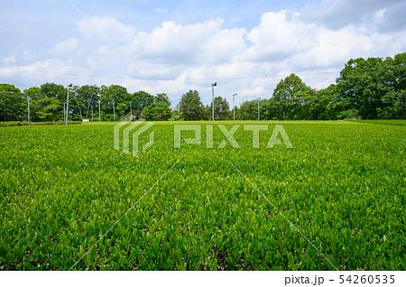 狭山の茶畑 54260535