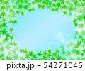 清涼感のある背景 青紅葉 フレーム 54271046