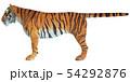 ジャングルの王☆虎 54292876
