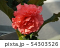 花、バラ、バラ園 54303526