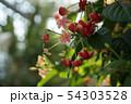花、植物 54303528
