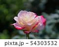 花、薔薇、クローズアップ 54303532