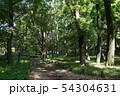 山道、森林 54304631