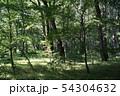 森林 森 54304632