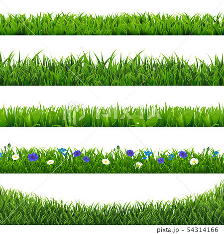 Green Grass Collection Border Isolated 54314166