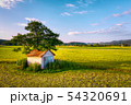 Old barn with damaged, collapsed roof under a large tree in rural landscape 54320691