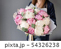 Pink and white peonies in womans hands. Beautiful peony flower for catalog or online store. Floral 54326238