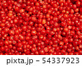 berries of red currant 54337923