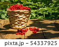 basket with currants 54337925