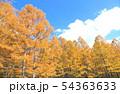 カラマツ林 54363633