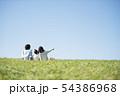草原でピクニックをするファミリーの後ろ姿 54386968