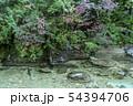 初秋の赤沢渓谷 54394706