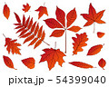 collection beautiful colorful set Autumn leaves of 54399040