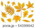 set Autumn leaves of orange on white. Vector 54399042
